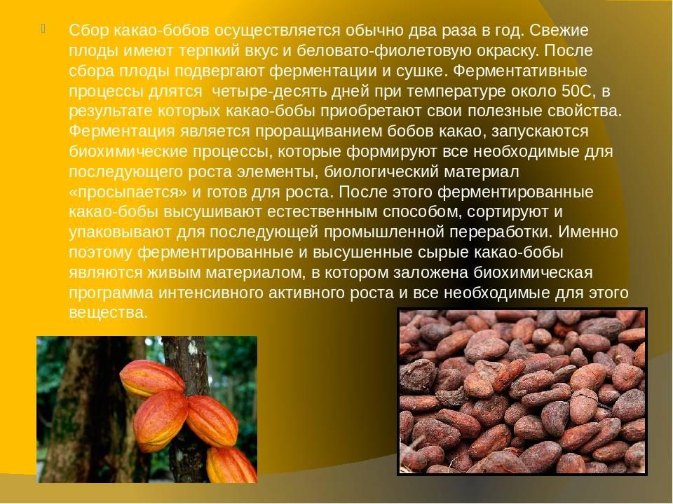 Какао (порошок) — польза и вред для здоровья, какой выбрать