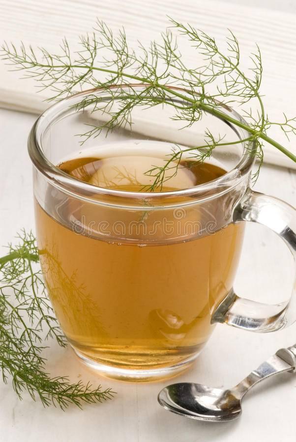 Чай с фенхелем — 16 полезных свойств, лечебные рецепты и противопоказания