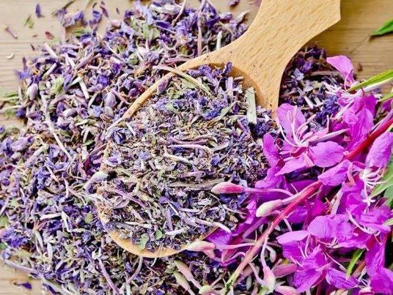 Сбор и сушка цветов жасмина для чая — подробное описание процесса