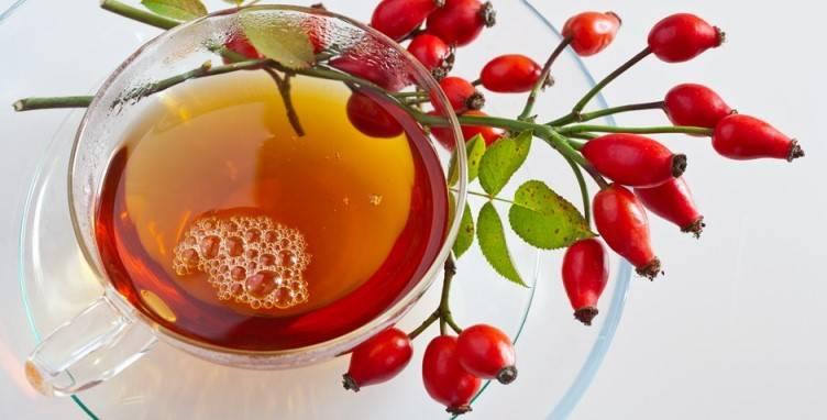 Калина красная: полезные свойства, противопоказания и применение