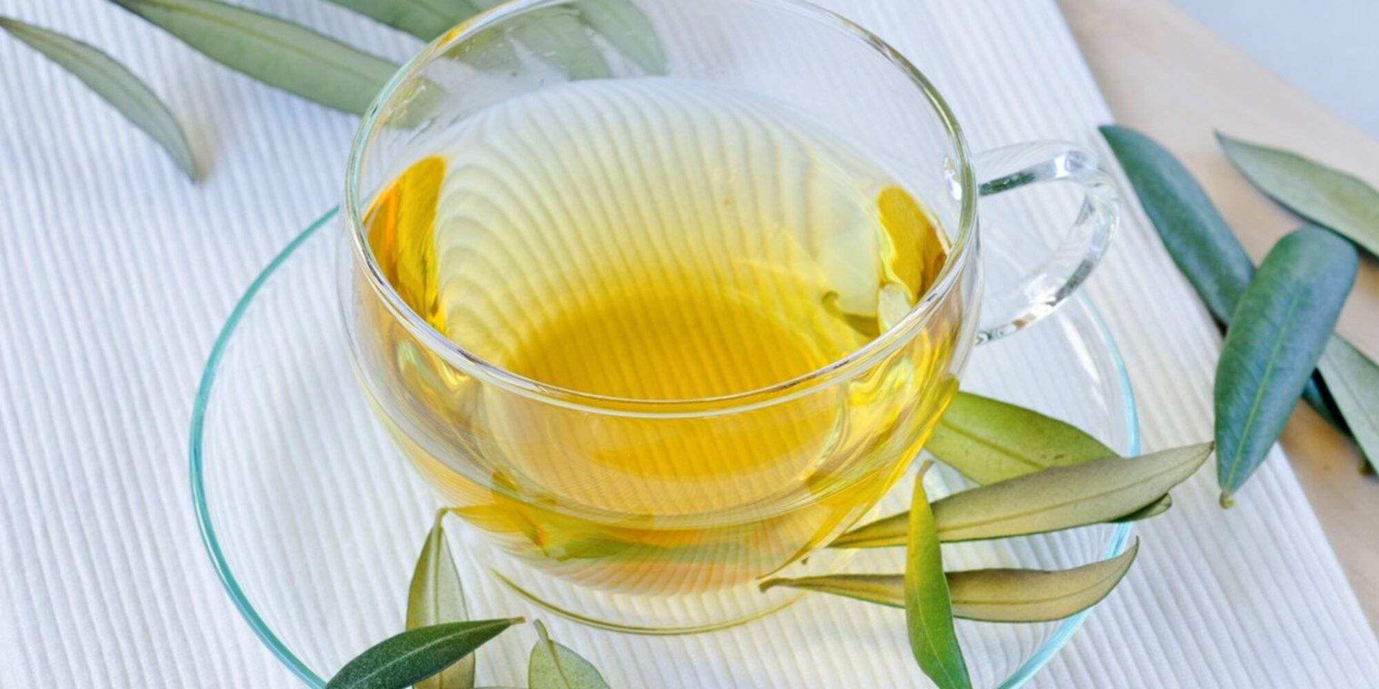 Липовый чай: польза и вред, особенности, сбор и заваривание