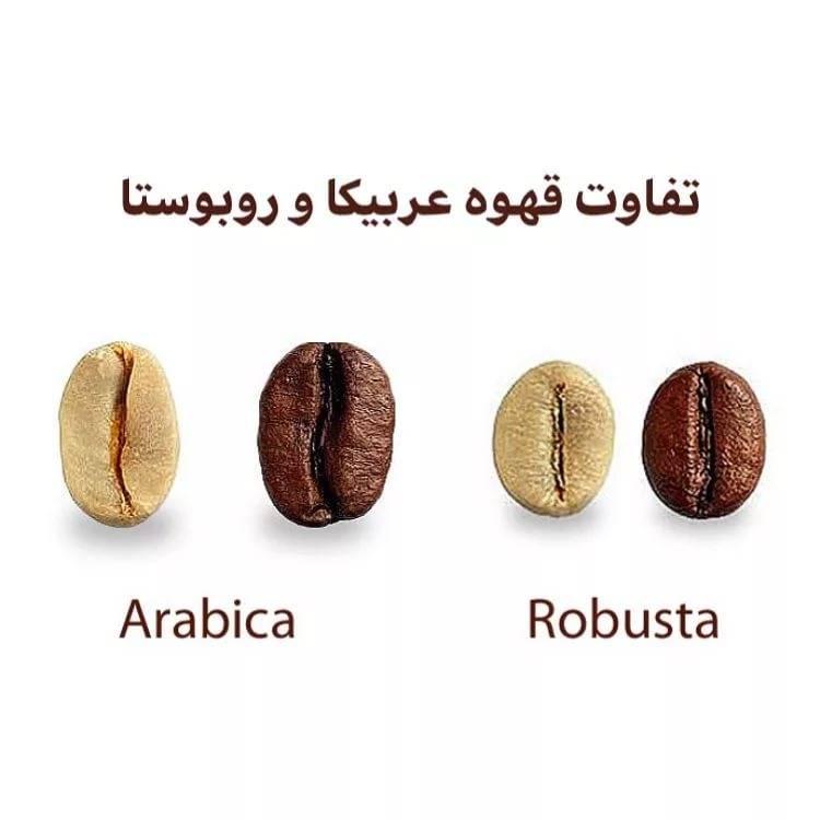 Арабика и робуста, в чем разница между ними