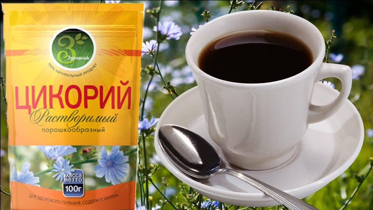 Цикорий вместо кофе – в чем преимущество. что полезнее пить. как собирать, сушить и хранить растение для заваривания