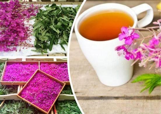 Польза и вред иван-чая для здоровья человека. как приготовить чай