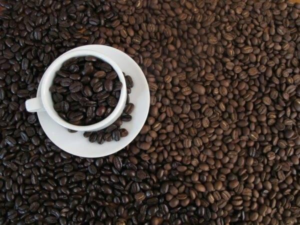 Про вкус кофе из домашней/профессиональной кофеварки и автоматической кофемашины от эксперта