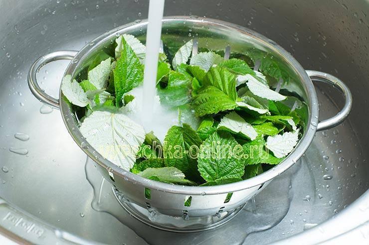 Чай из листьев малины: польза и вред, полезные свойства малиновых листьев