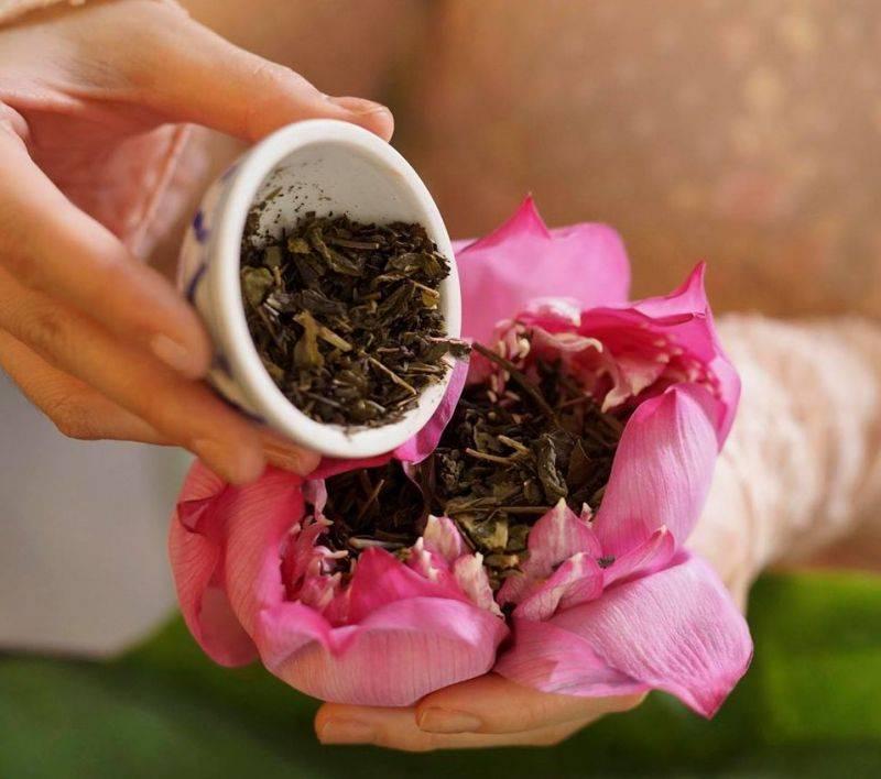 Полезные свойства и правила приготовления чая из лотоса. чем отличаются чаи с лотосом из вьетнама и китая?