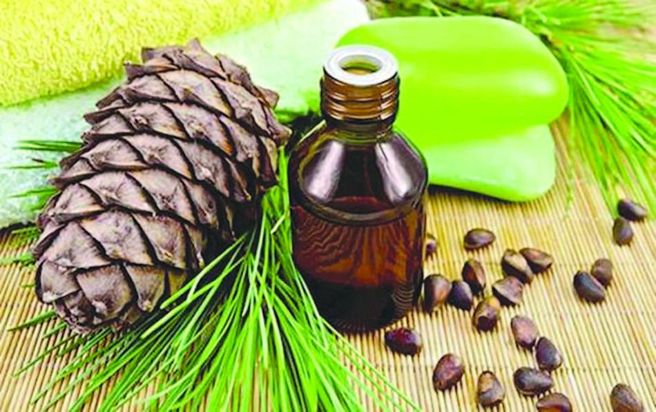 Пихта: лечебные свойства и вред, применение, что лечит, рецепты настоек, отваров