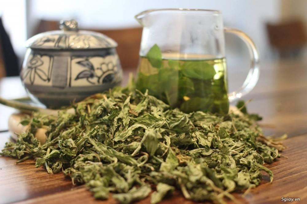 Пейте чай из крапивы — будете здоровы