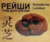 Чай с грибом рейши (трутовик): польза, противопоказания и отзывы