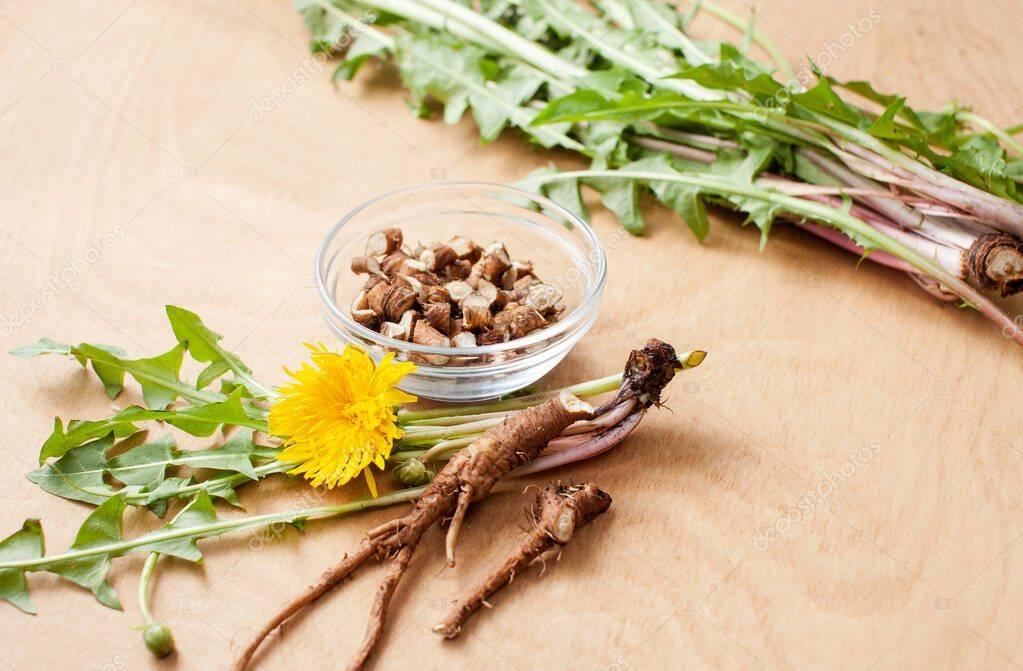 Как сушить корни одуванчика в домашних условиях, когда собирать, цветы, для чая, на зиму, для гербария