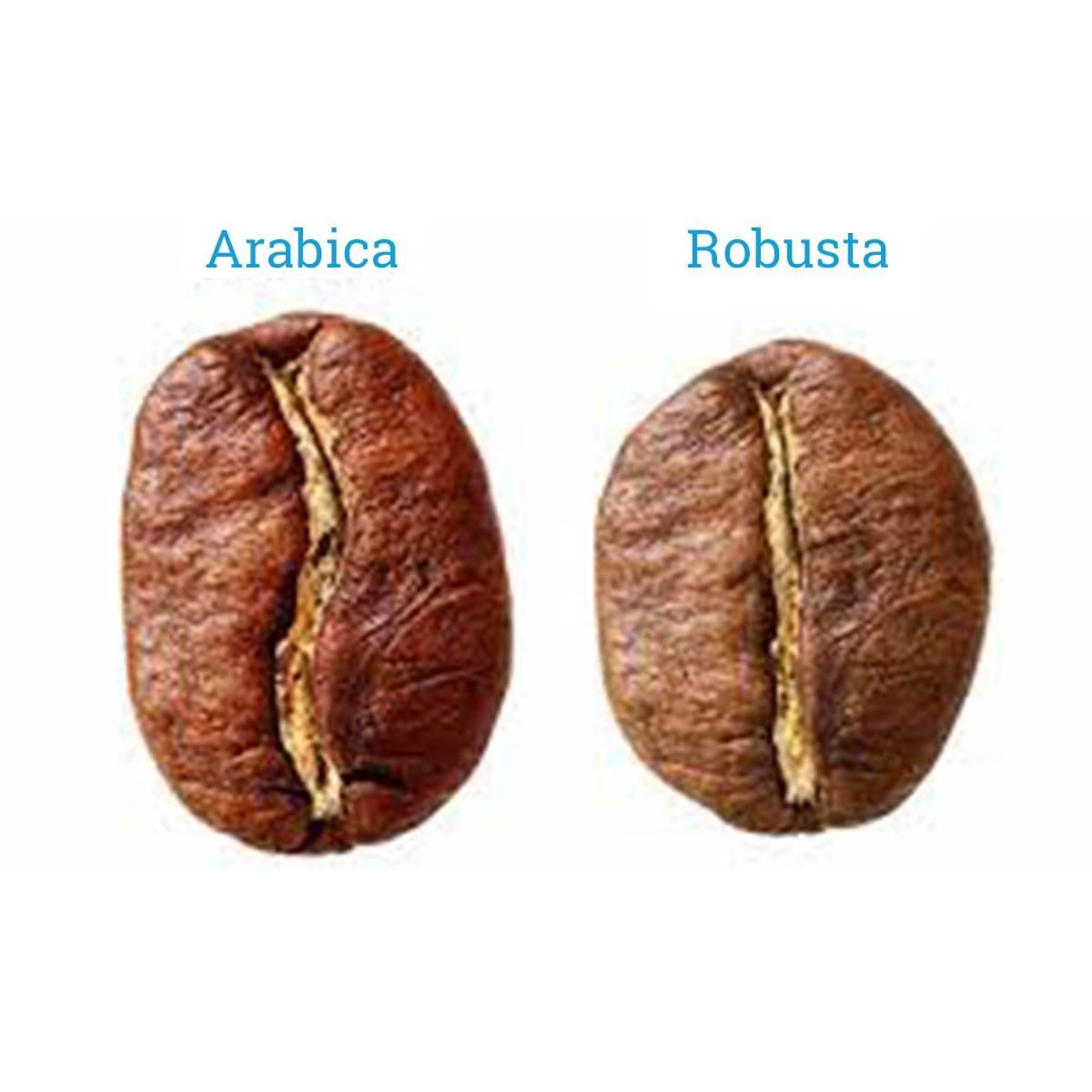 Арабика и робуста: в чем отличие?