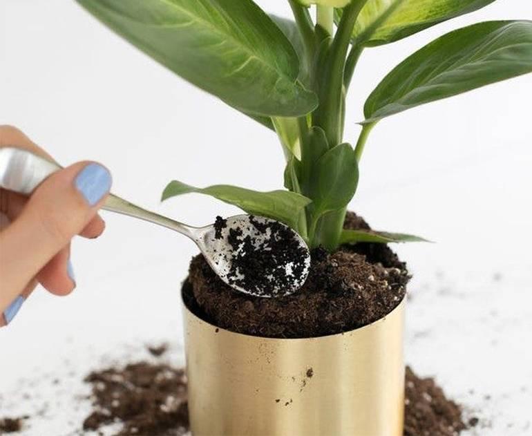 Применение кофе в саду, огороде, рецепты подкормки