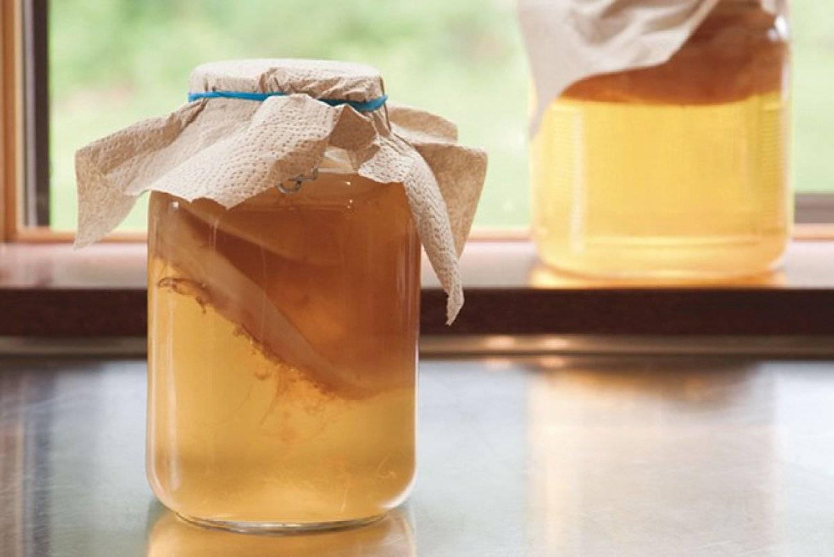 Польза и вред чайного гриба. как вырастить и применять