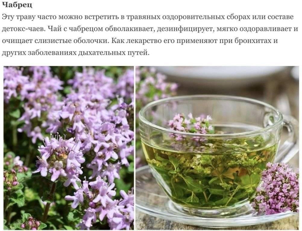 Можно ли пить шалфей как чай: лечебное действие настоя