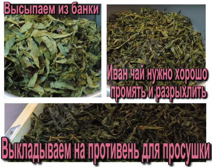 Домашние специи и чаи: как правильно сушить травы