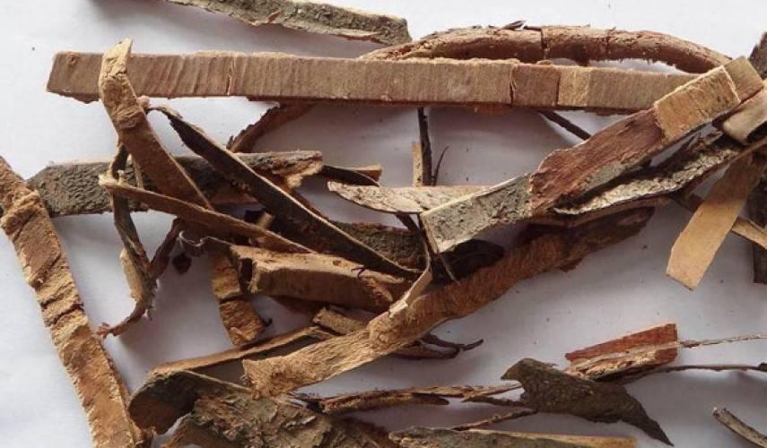 Слабительный жостер – лечебные свойства и 3 лучших рецепта с корой крушины