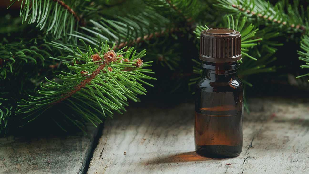 Целебные свойства пихты. лекарства из пихты и её лечебные свойства
