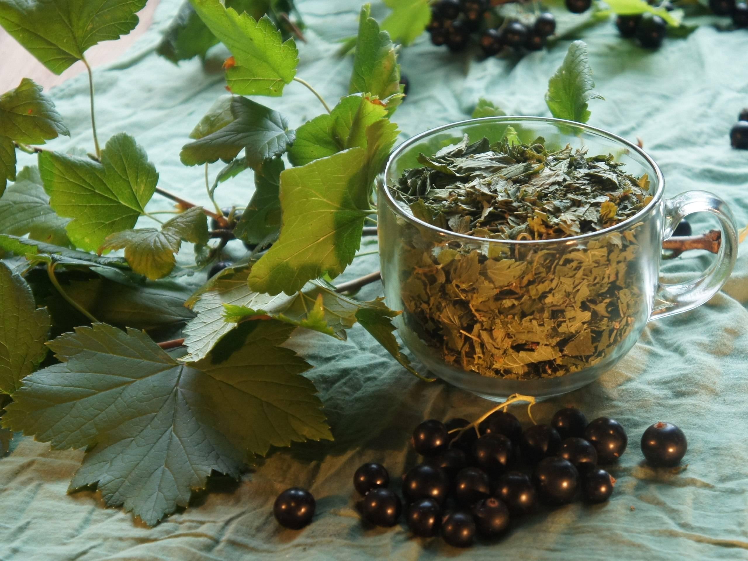 Чем полезен чай с листьями смородины? | дары природы.су