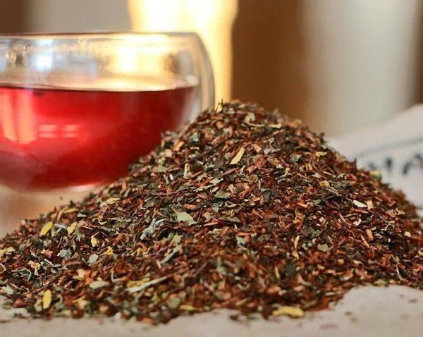 Полезные и вредные качества напитка травы ройбуш