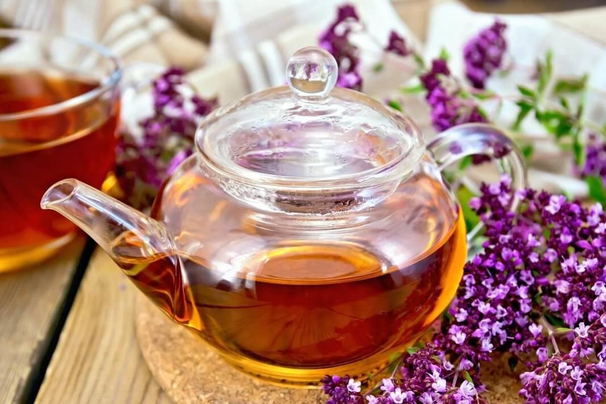 Чай из душицы полезные свойства и противопоказания