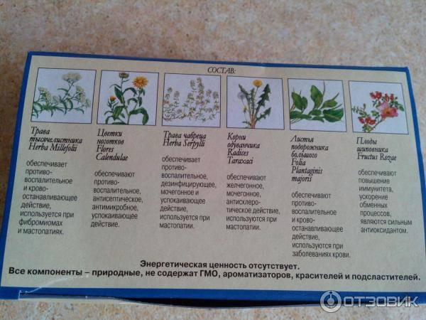 Чай мастофитон: инструкция по применению
