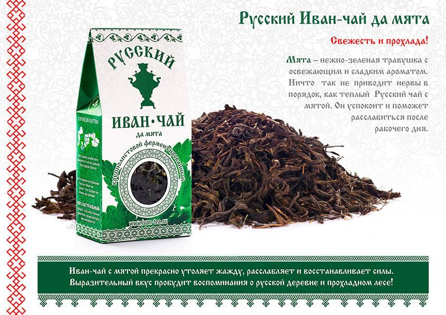 Иван-чай: лечебные свойства и противопоказания