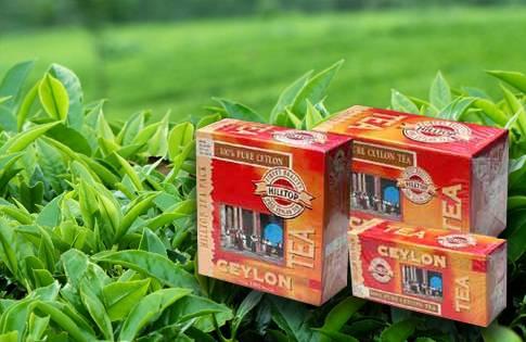 Цейлонский чай: состав, польза и вред