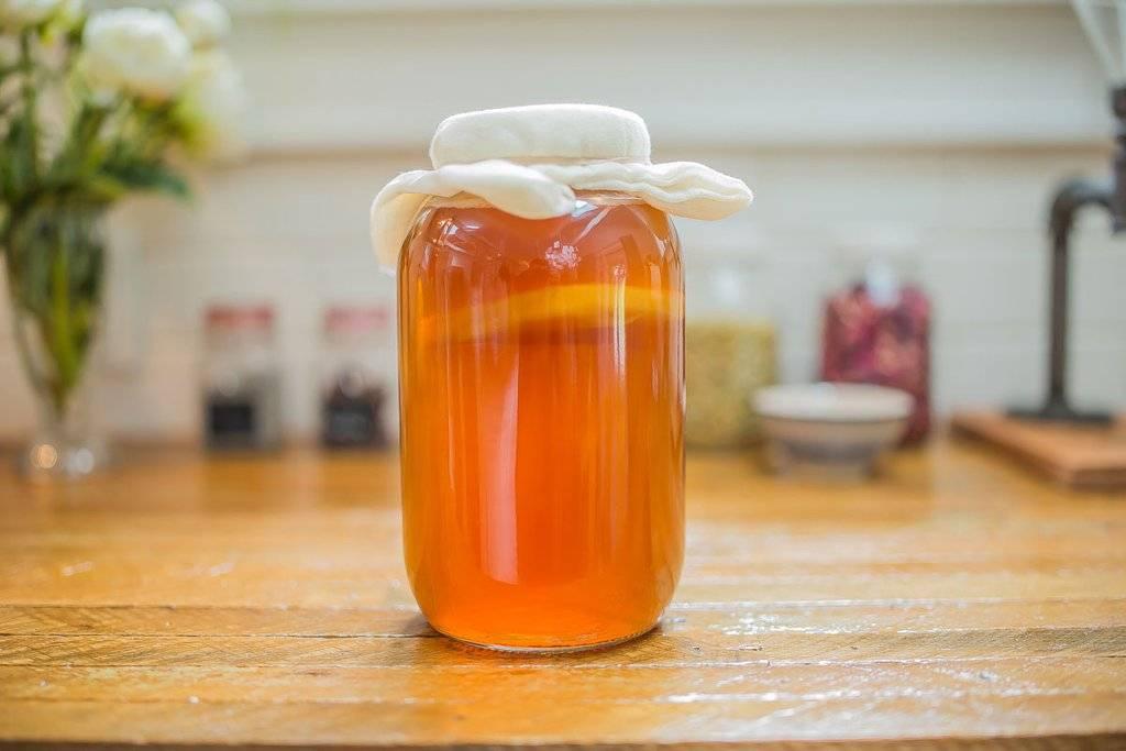 Чайный гриб от а до я: полезные свойства и противопоказания. как ухаживать в домашних условиях