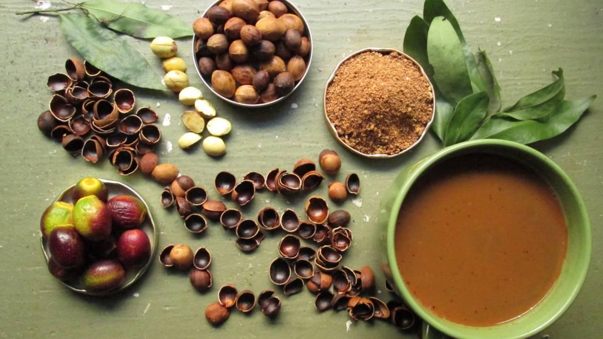 Желуди: польза и вред, рецепты, как едят