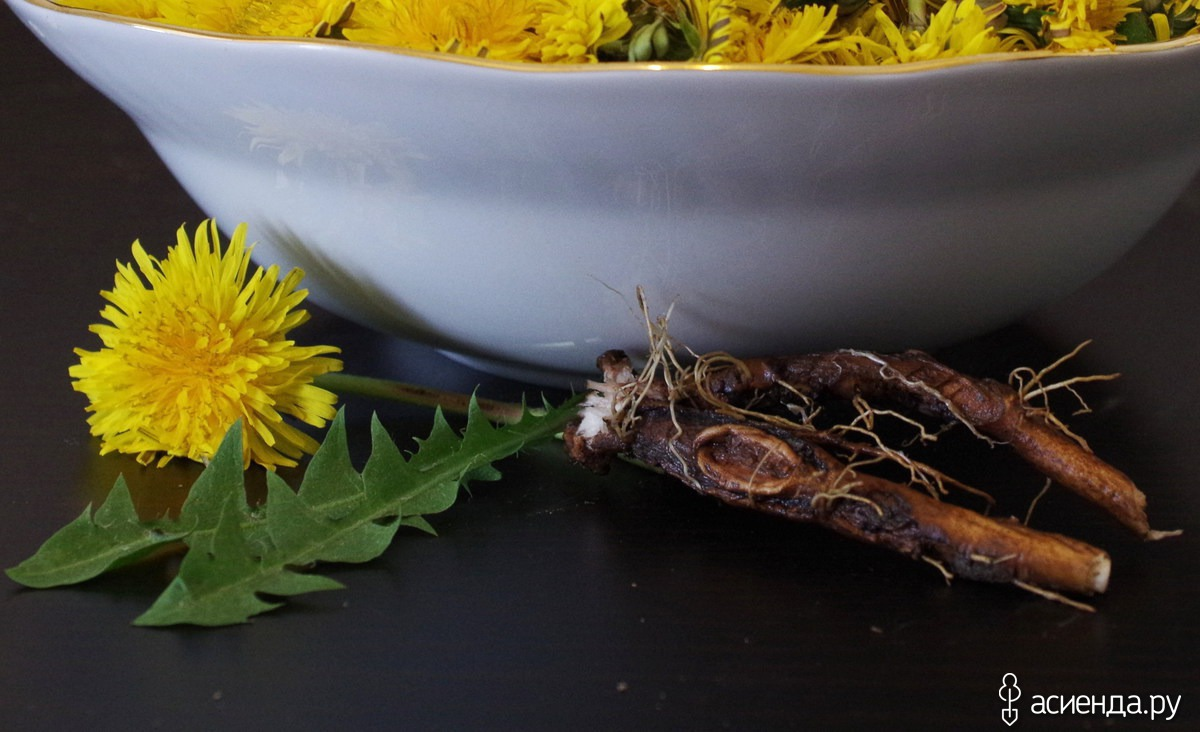 Чай из одуванчика лечебные свойства