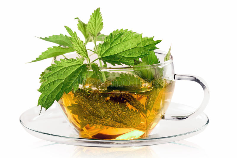 Крапива лечебные свойства и противопоказания, рецепты чая, настоя и отвара