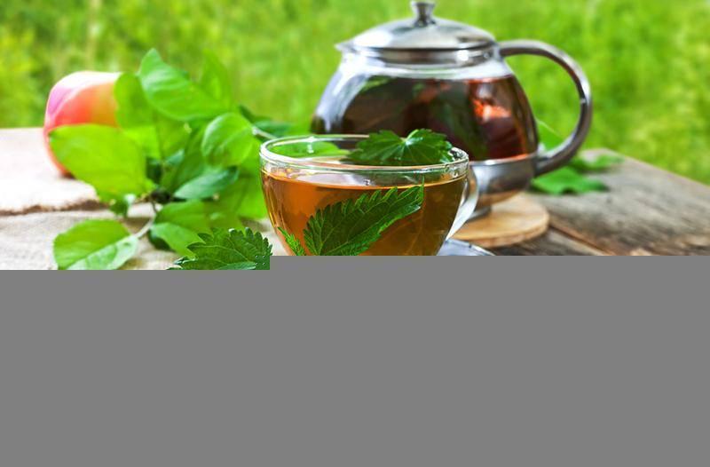 Чай из пустырника: особенности применения