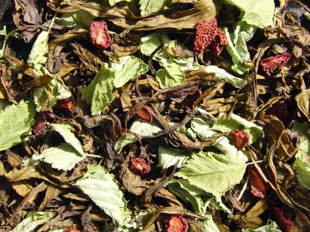 Чай из листьев земляники — польза и вред   польза и вред