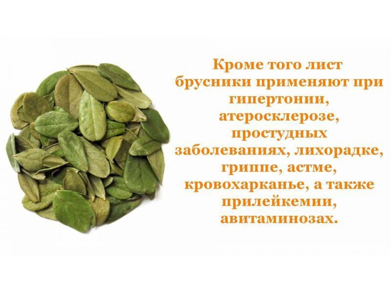 Брусника: лечебные свойства для организма, состав, рецепты