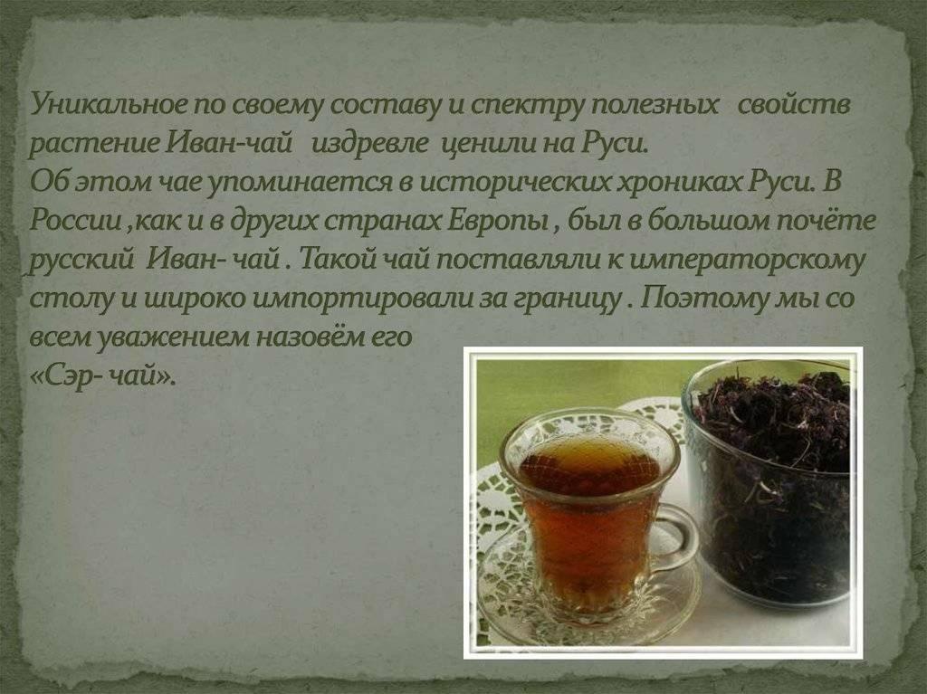 Курильский чай — свойства и противопоказания, применение и состав | здоровье и красота