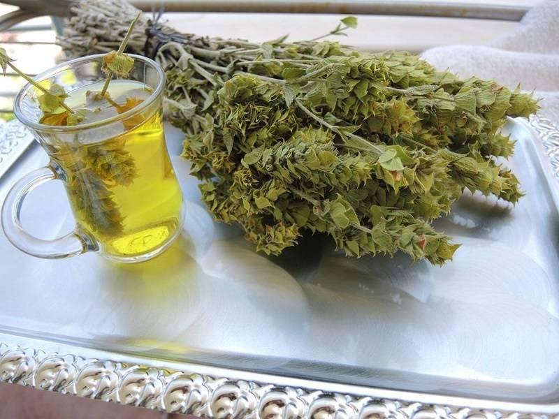 Эвкалиптовый чай – вкуснейший напиток с противовирусными и антибактериальными свойствами