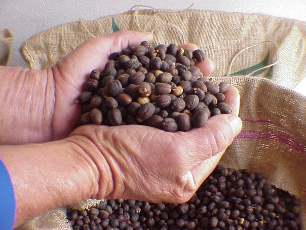 Характеристика гватемальского кофе