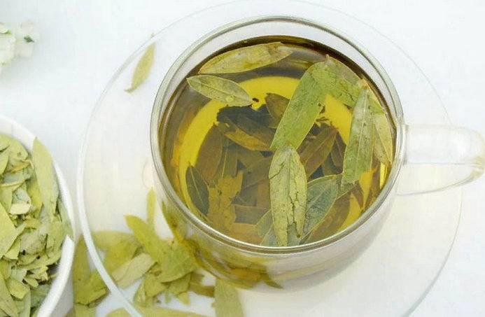 Трава сенны — лечебные свойства и противопоказания
