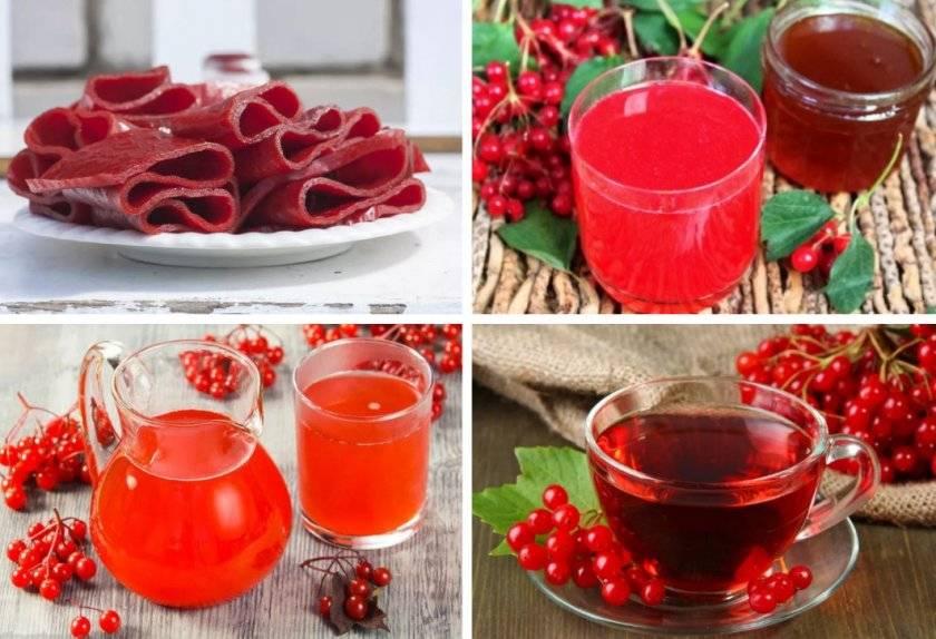 Чай из калины: польза для здоровья, рецепт