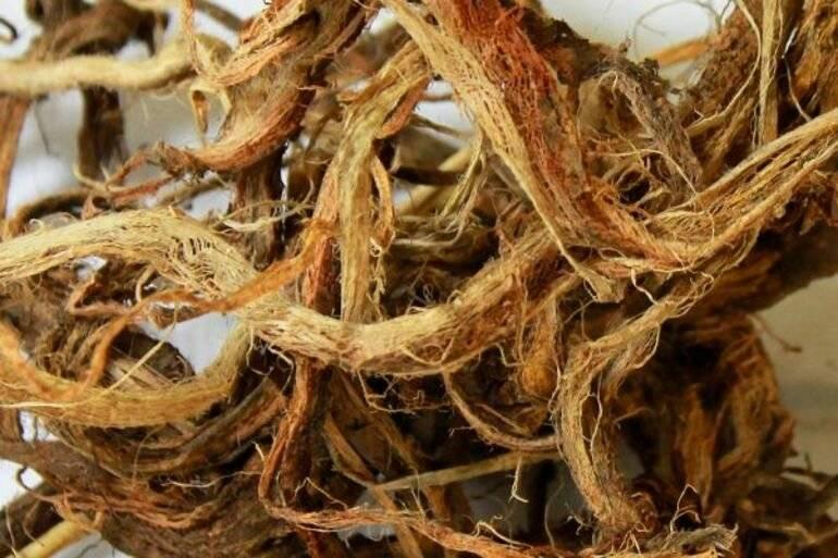 Красный корень — препараты на основе копеечника для укрепления потенции