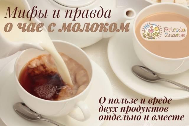 Польза и вред чая с молоком для организма, состав и свойства, противопоказания, суточные нормы и прочие нюансы употребления medistok.ru - жизнь без болезней и лекарств