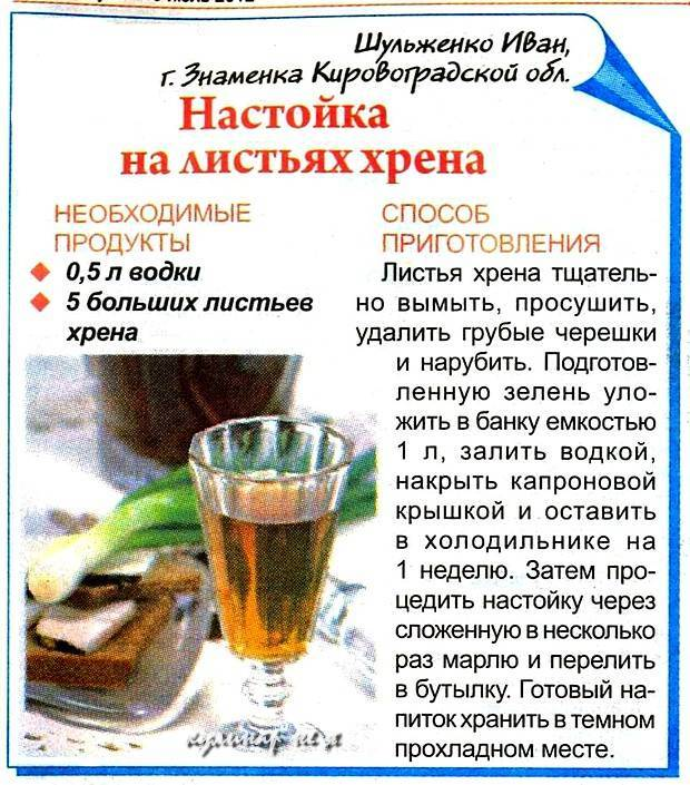 Листья хрена – применение в кулинарии и медицине, полезные свойства на ydoo.info