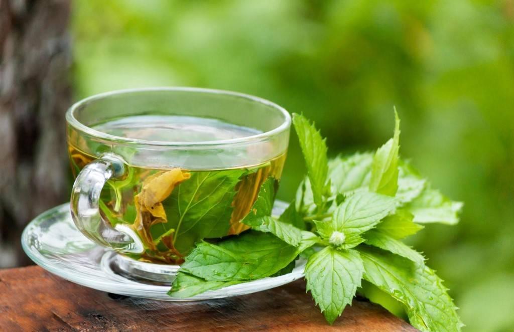 Польза и вред чая с мятой для женщины: способы применения и противопоказания