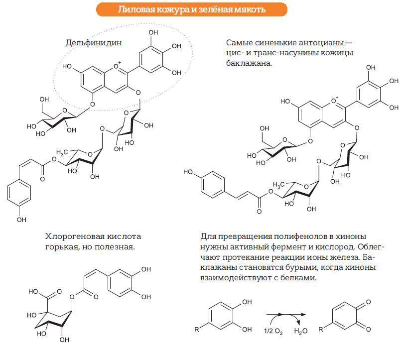 Хлорогеновая кислота + продукты богатые хлорогеновой кислотой