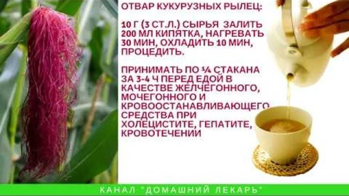 Кукурузные рыльца – полезный шелк, подаренный кукурузой