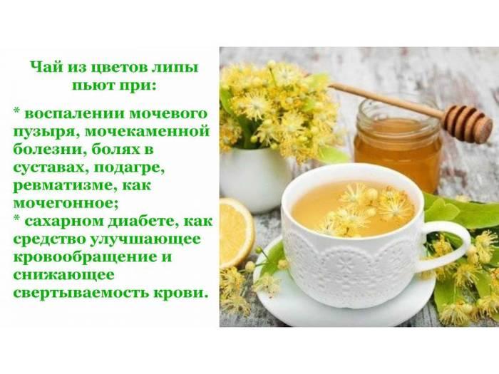 Цветки липы: полезные свойства и противопоказания, польза и вред, применение чая из липового цвета в лечебных целях