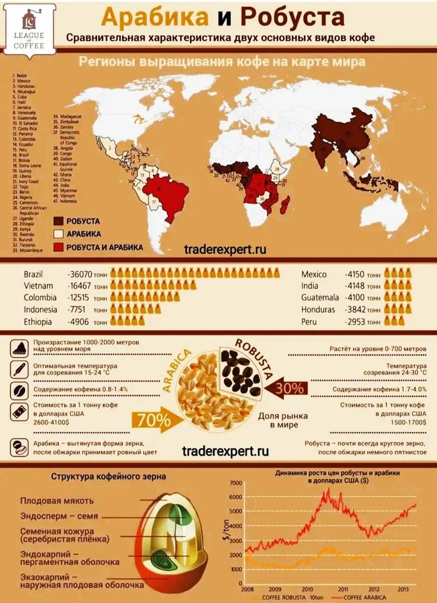 Кофе робуста: особенности этого вида, отличие робусты от арабики