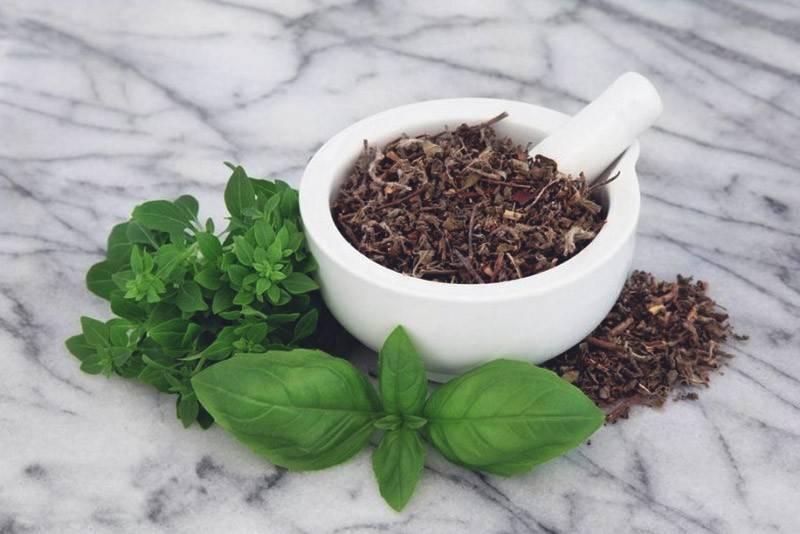 Чай с базиликом – польза и противопоказания, рецепты