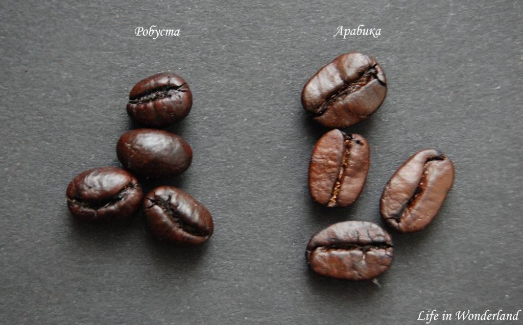 Робуста и арабика - различия сортов и как выбирать правильный кофе